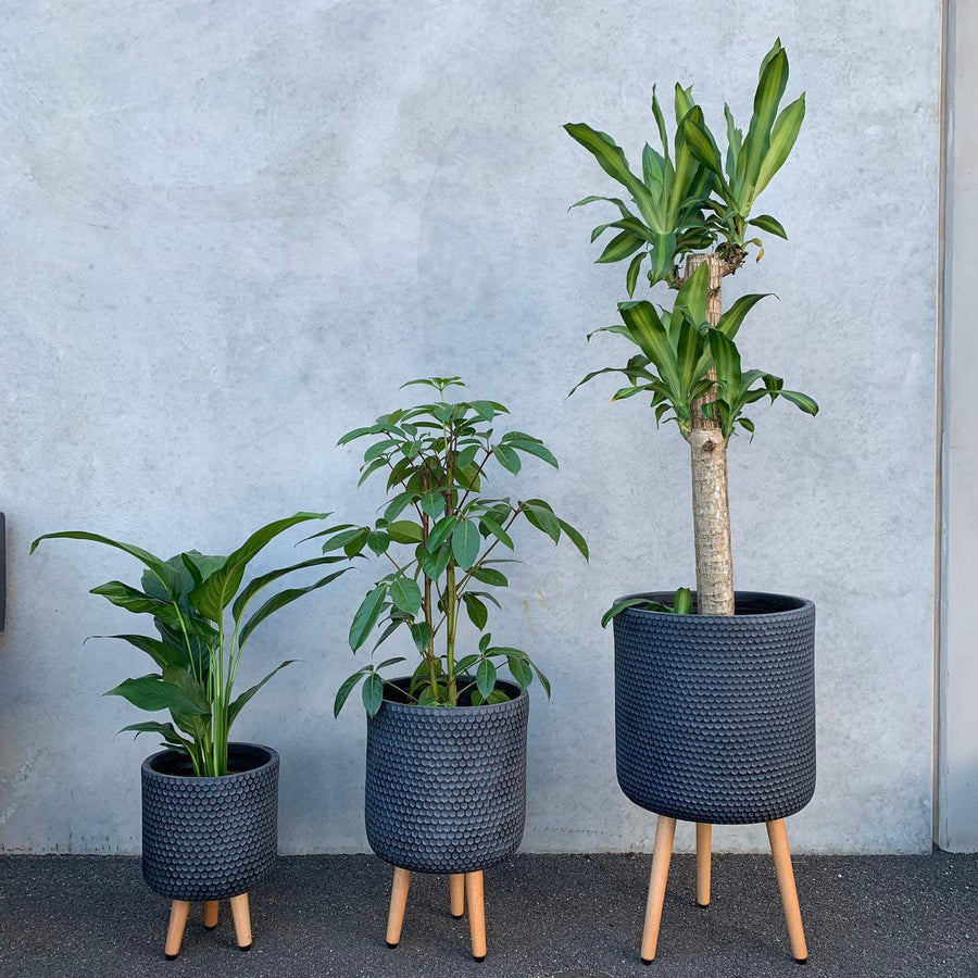 Lincoln Tripod Java Folia House