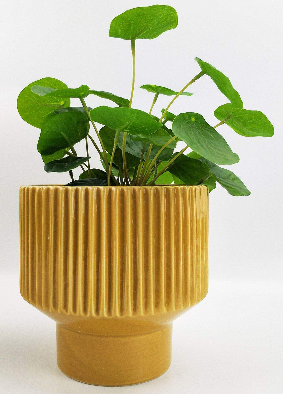 Nova Planter Mustard Folia House