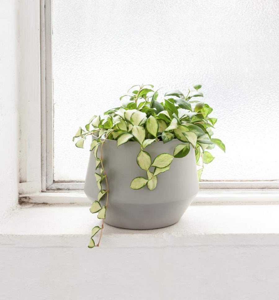 SAMSO PLANTER - GREY Folia House