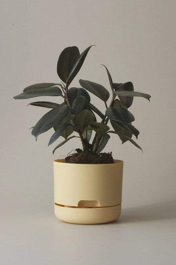 Self-watering Plant Pot Buff Folia House