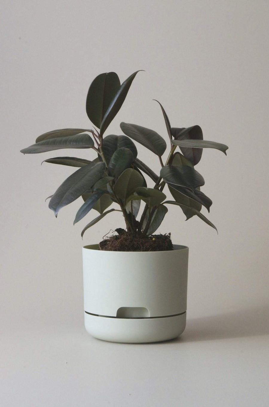 Self-watering Plant Pot Fog Folia House