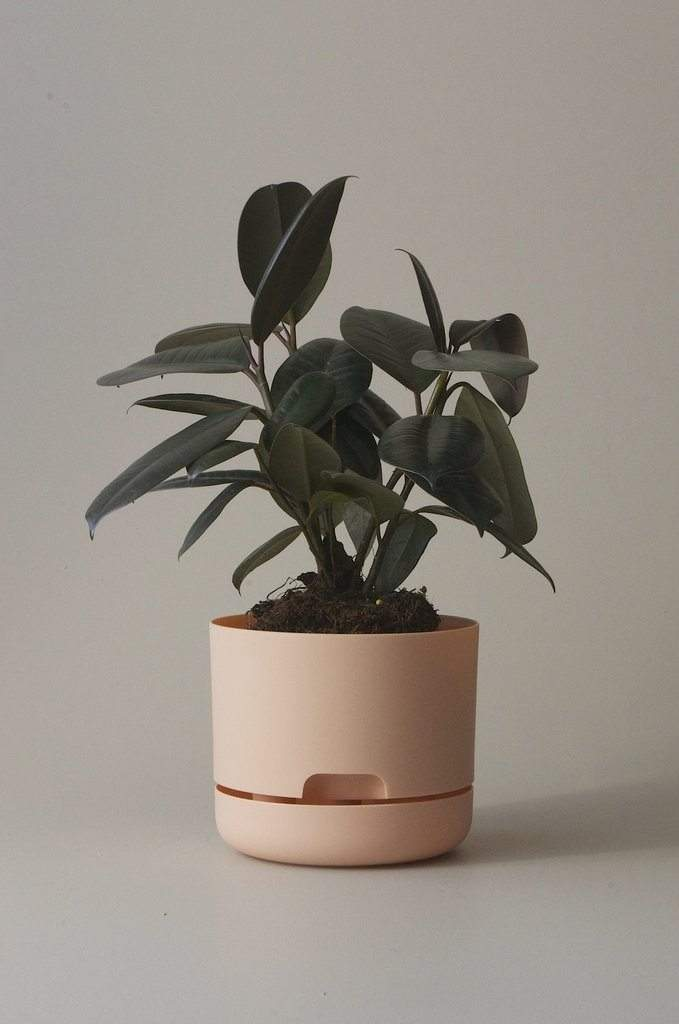 Self-watering Plant Pot Pale Apricot Folia House