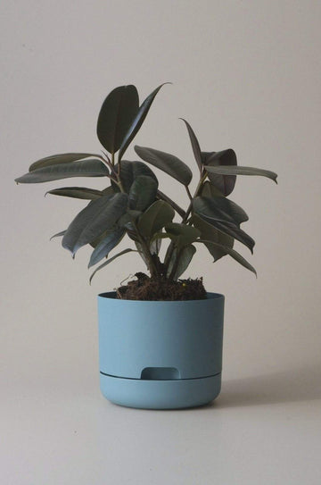 Self-watering Plant Pot Pond Blue Folia House