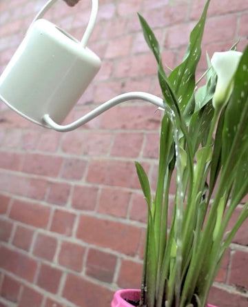 Watering can white Folia House