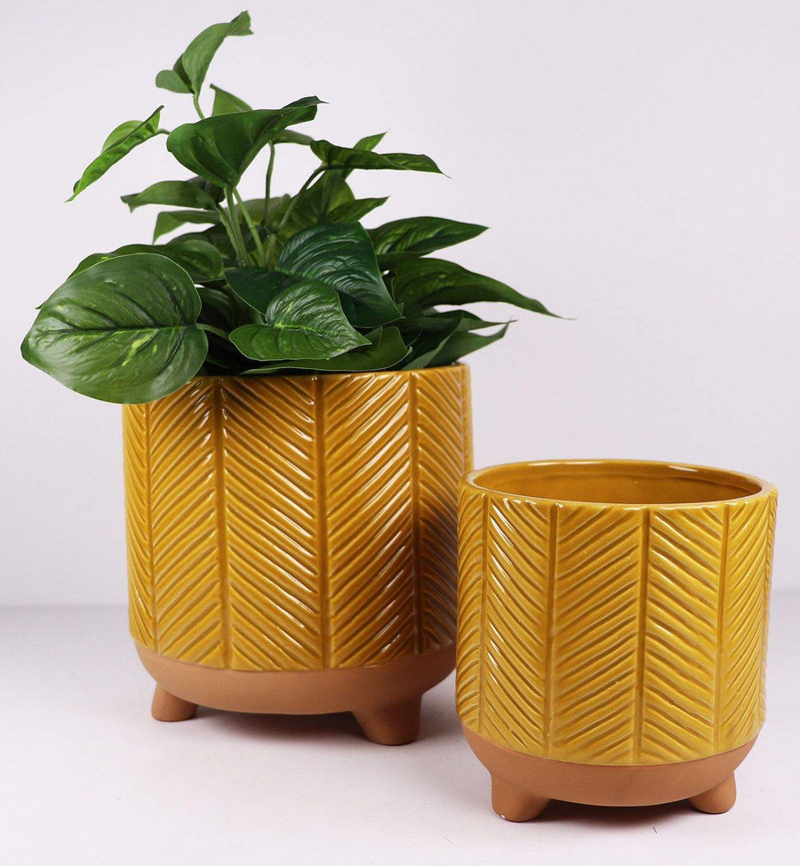 Zari Planter Mustard Folia House