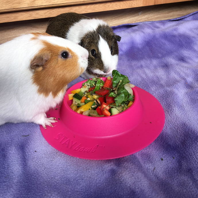 30-Day Guinea Pig Challenge: What My Guinea Pigs Taught Me About Healthy Eating