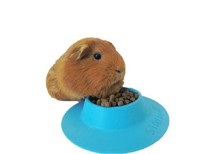 STAYbowl™ -- Why every guinea pig owner needs one