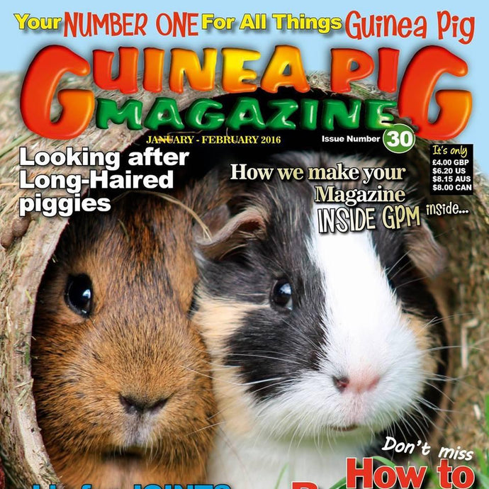 STAYbowl(TM) featured in latest issue of Guinea Pig Magazine!
