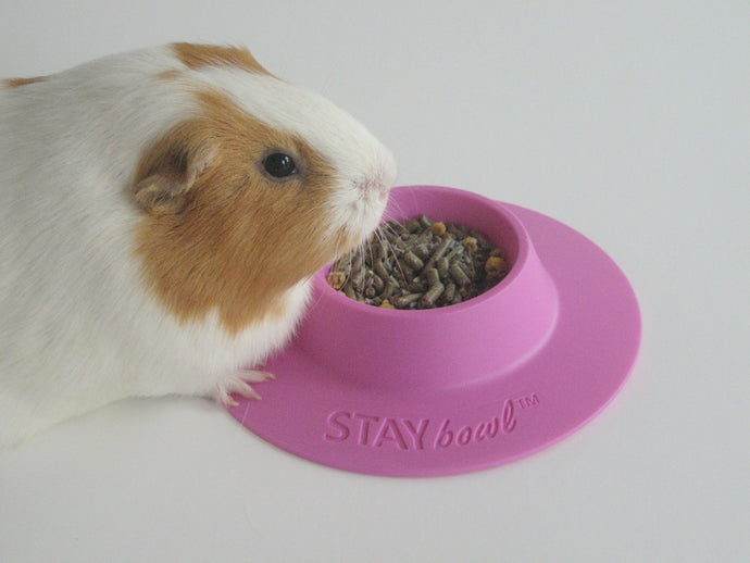 Two Pet Trade Magazine Announcements for STAYbowl™