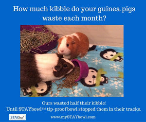 Do your guinea pigs like to flip their food bowl over?
