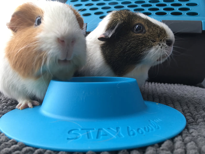 STAYbowl® saves time and money, but also promotes small pet health and wellness