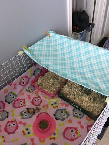 guinea pig kitchen