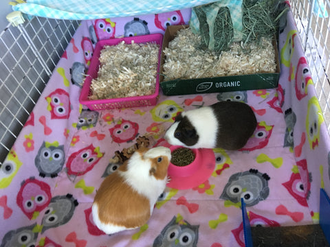 Wondering How To Keep Your Guinea Pig Fleece Bedding Cage
