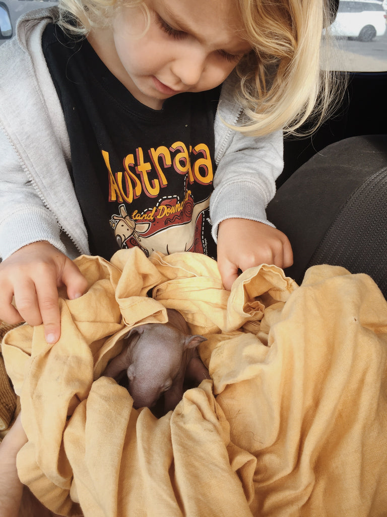 Rescuing Wollie-Poa — A Wombat Tale