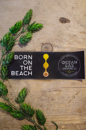 "Ocean Lab ""Born On The Beach"" Bumper Logo Sticker"