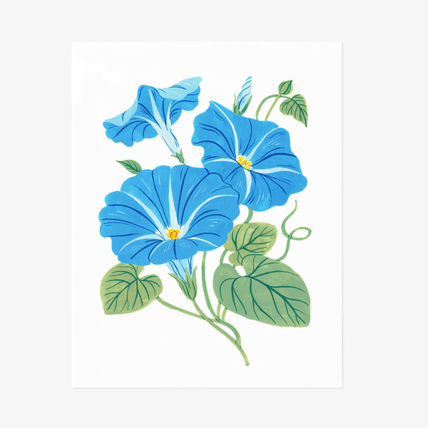 Morning Glory | Giclée Art Print