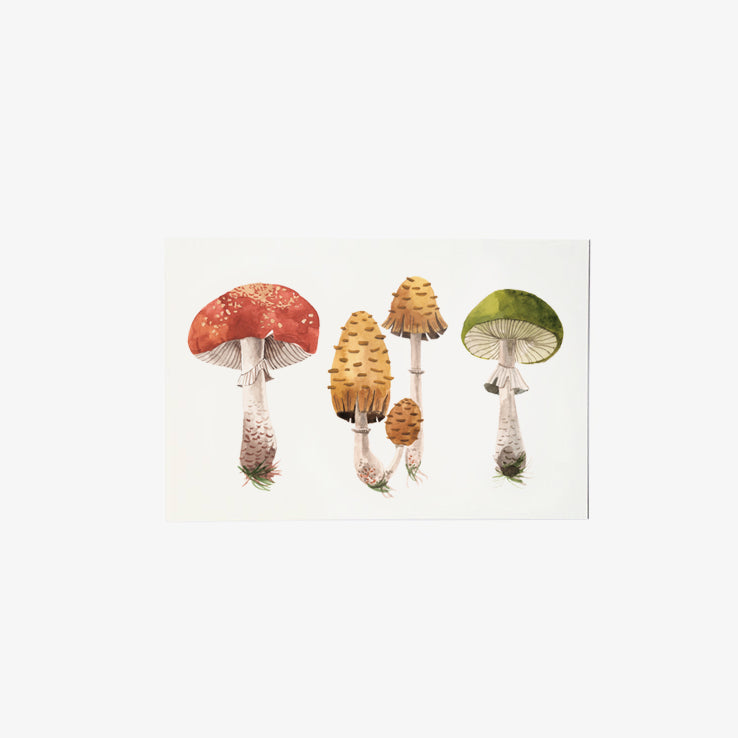 Mushroom Study | single postcard