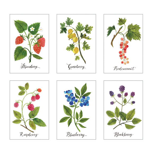 BERRIES | set of 6 postcards