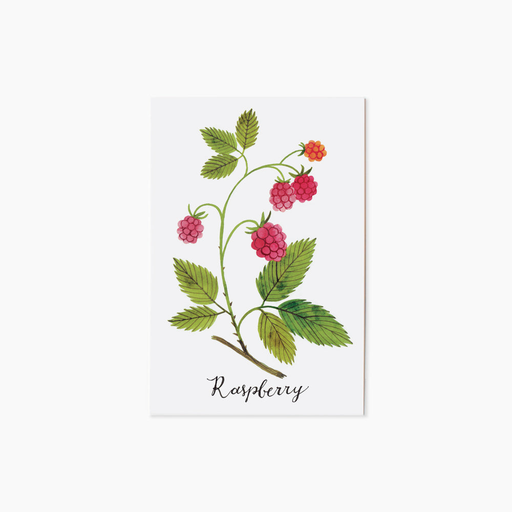 RASPBERRY | single postcard