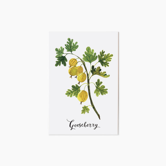 GOOSEBERRY | single postcard