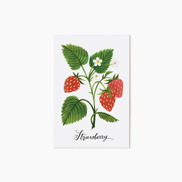 STRAWBERRY | single postcard
