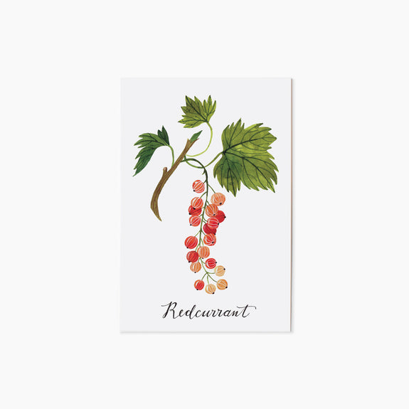 REDCURRANT | single postcard
