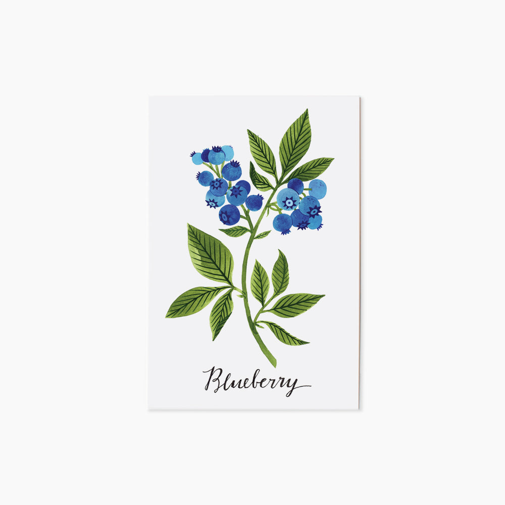 BLUEBERRY | single postcard