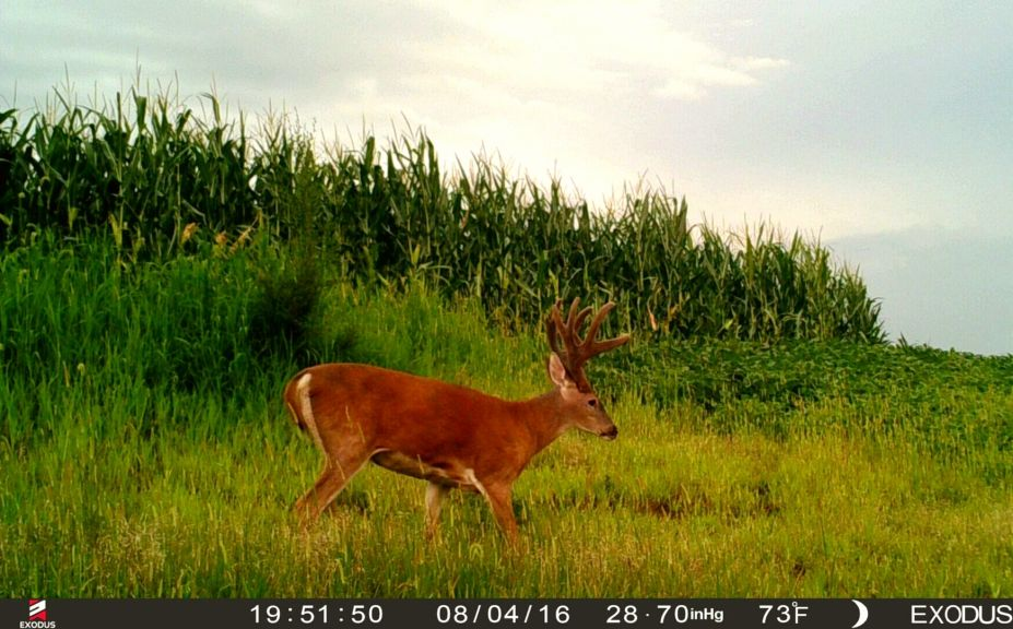 3 Reasons To Hide Your Food Plots