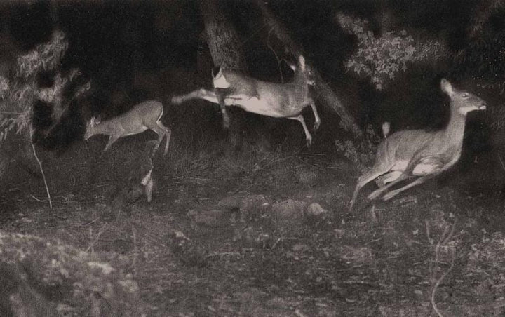 3 tips helping your trail camera produce a better result