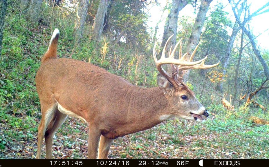 5 Tips For Increasing Daytime Trail Cam Pics