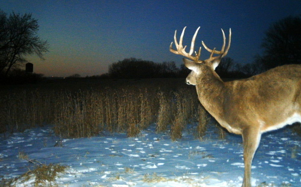 5 Ways To Kill A December Buck
