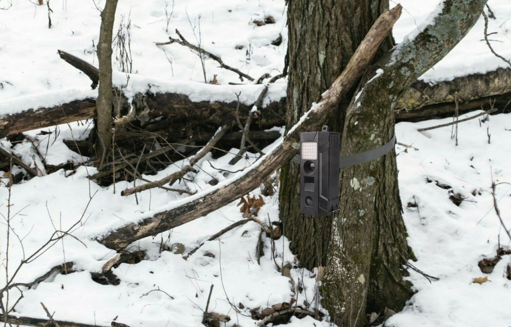 Are Your Trail Cams Hidden Enough? An Easy Review