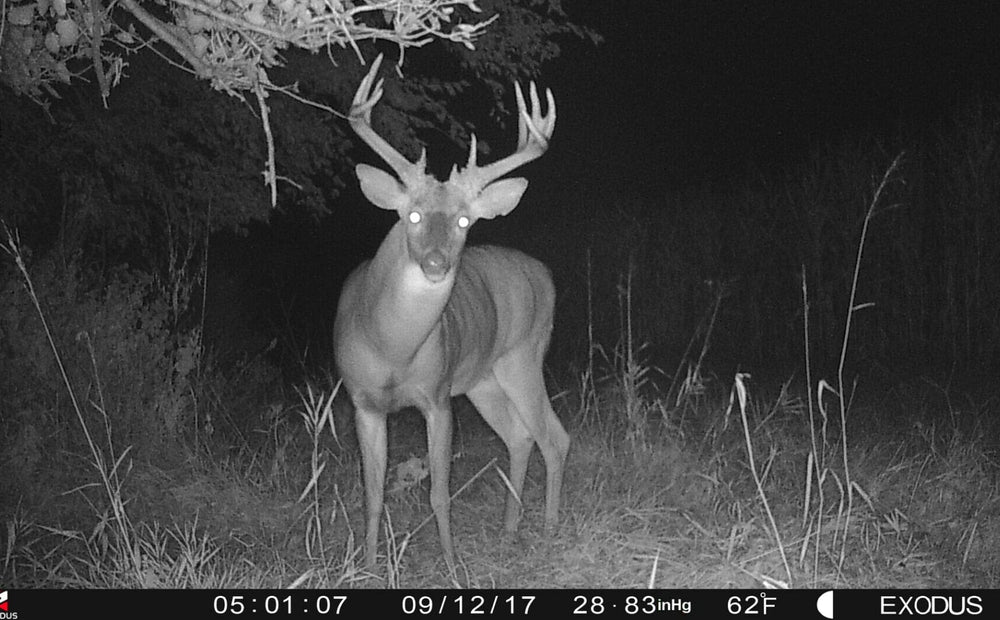 Best Ways To Access Trail Cameras