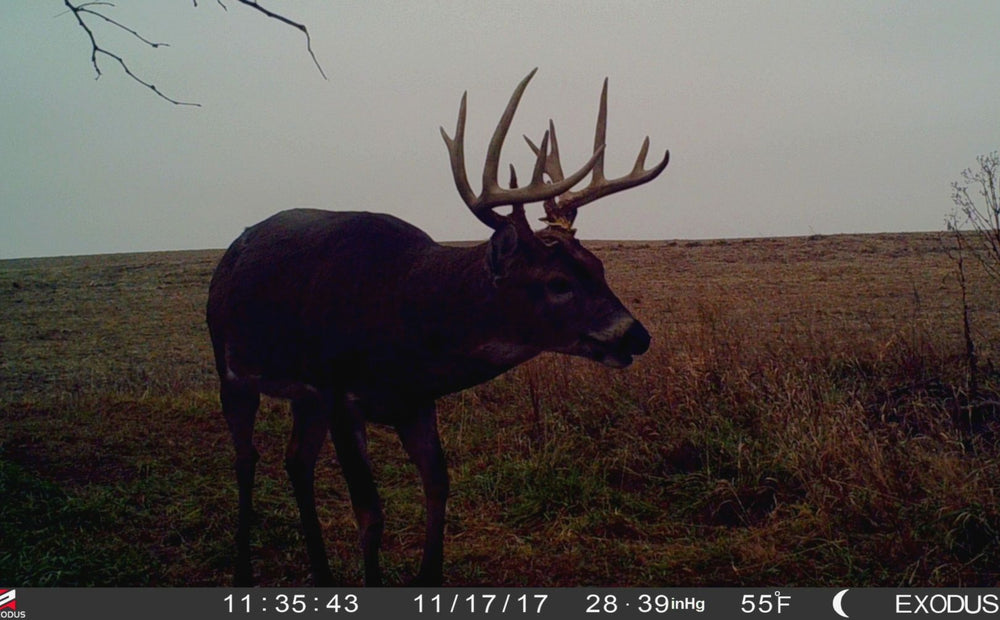 Evening Thermal Hunting Tips For Fooling Whitetails