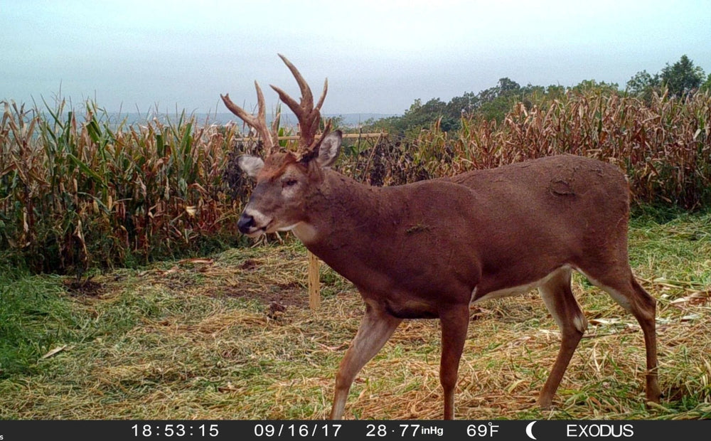 How to increase daylight deer movements for hunting