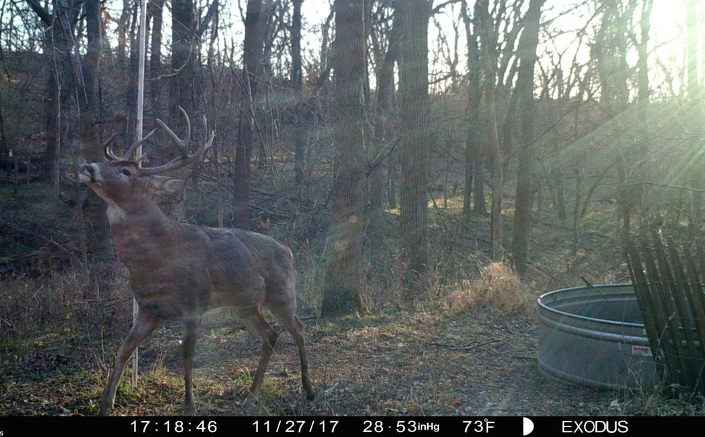 Way To Fool A Whitetail's Nose