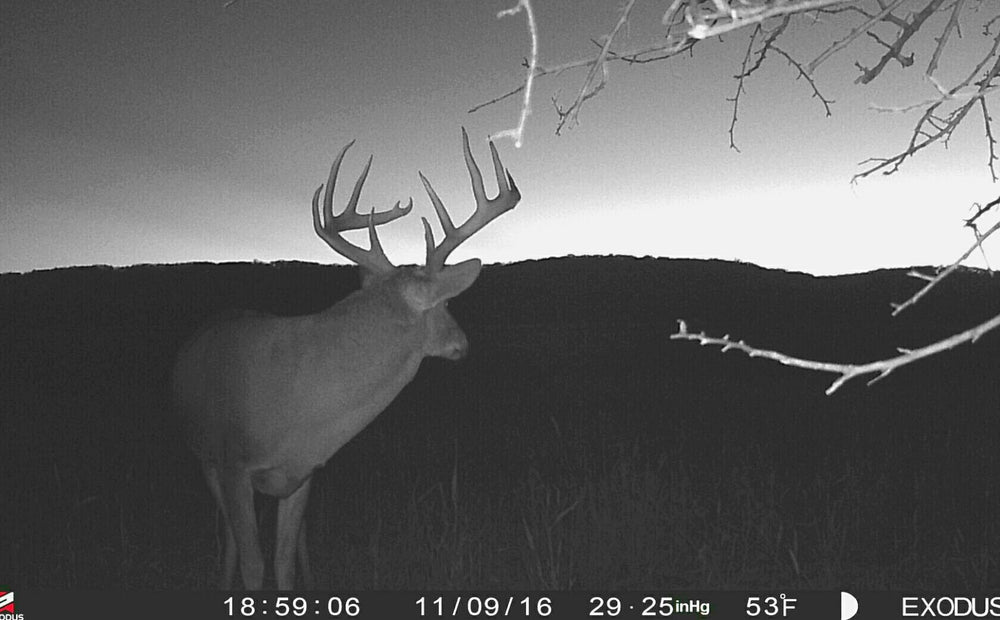 When To Switch From Evening To Morning Deer Hunting