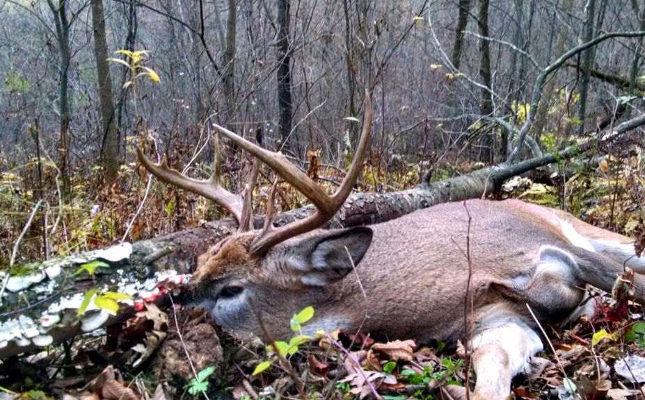 Whitetail Bedding Log Myth Tips