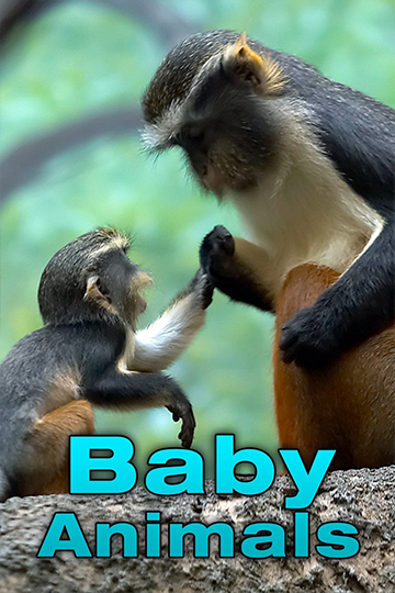 Baby Animals Season 1 2015