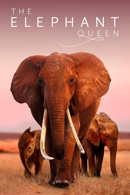 The Elephant Queen 2019