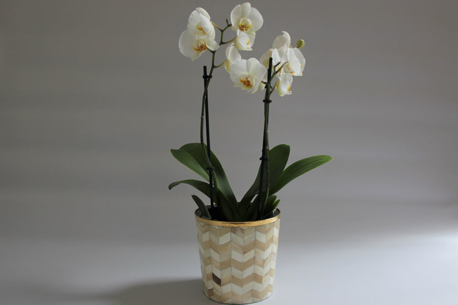 Beige and Cream Bone Inlay Medium Planter