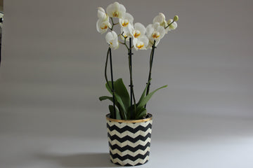 Black and White Bone Inlay Medium Planter