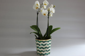 Green and White Bone Inlay Medium Planter