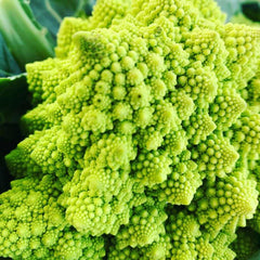 Broccolo siciliano