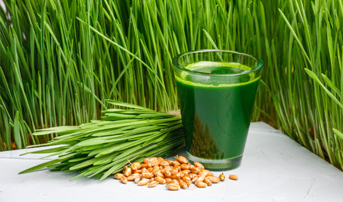 Juice Wheatgrass at Home with Zstar