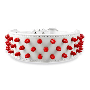 Studded Collar  - White/Red ( 2 in. )