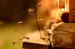 Bee Hive Rental and Hosting