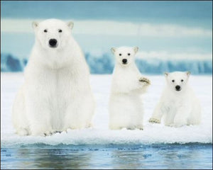 Polar Bear (Family) - Mini Poster - 40cm x 50cm
