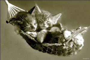 Keith Kimberlin - Kittens In A Hammock - Maxi Poster - 61 cm x 91.5 cm