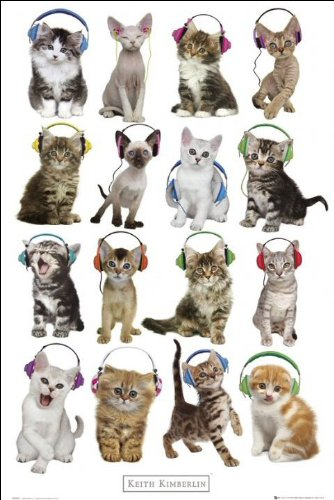 Keith Kimberlin (Kittens Headphones) - Maxi Poster - 61cm x 91.5cm
